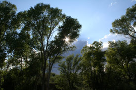 San Pedro River trees